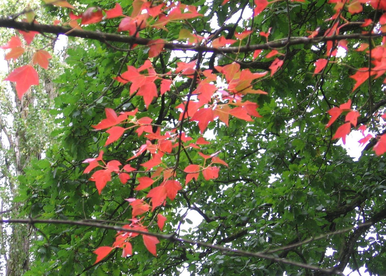 jardin-botan-saverne-feuilles-rouges.jpg