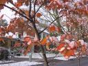 feuilles-rouges-neige-b.jpg