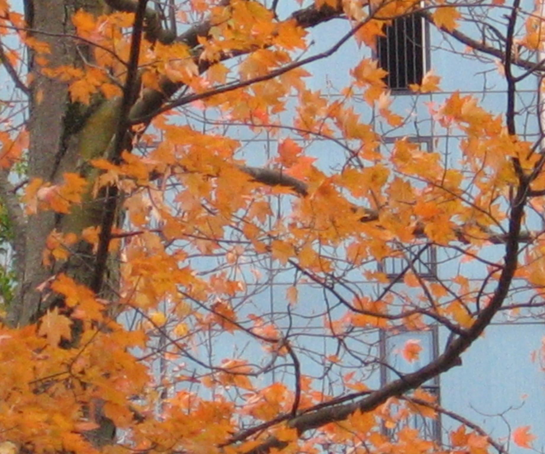 or-sur-facade-bleue-niagara.jpg